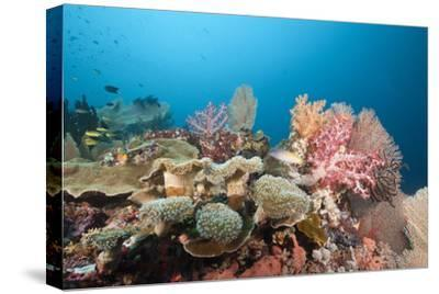Very Varied Coral Reef, Florida Islands, the Solomon Islands