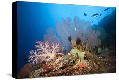 Very Varied Coral Reef, Russell Islands, the Solomon Islands