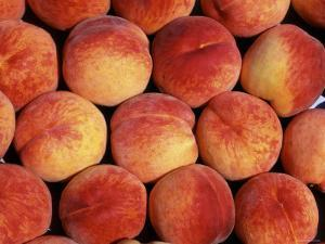Peaches (Prunus Persica) Europe by Reinhard