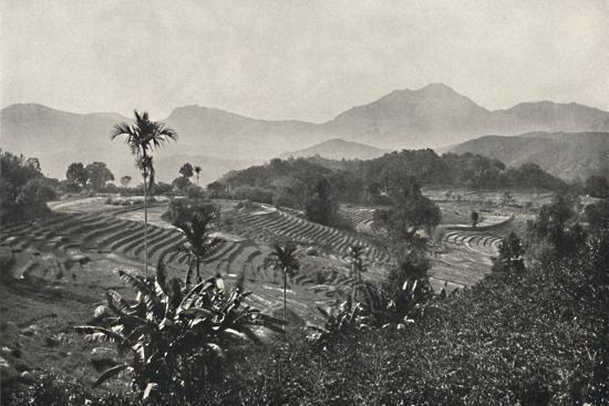 'Reisfelder in Terrasen angelegt', 1926-Unknown-Photographic Print