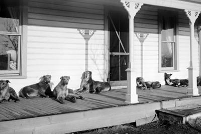 Relaxed Dogs Lounge on a Farmhouse Porch, Ca. 1905