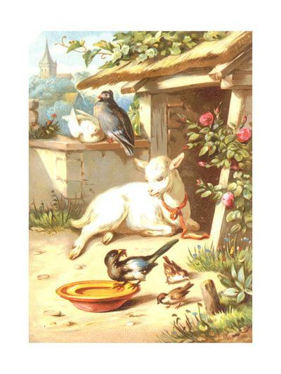 Relaxing Baby Goat with Birds Illustration--Art Print