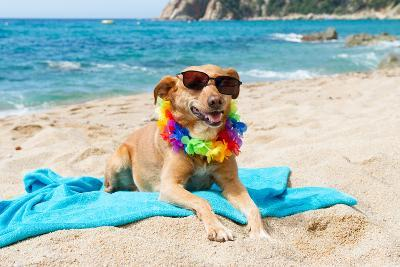Relaxing Dog At The Beach With Flowers Garland-Ivonnewierink-Photographic Print