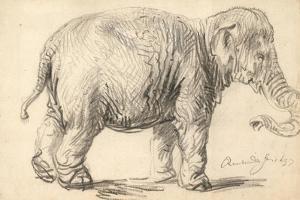 An Elephant, 1637 by Rembrandt Harmensz. van Rijn