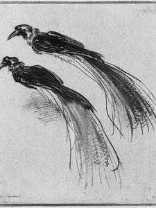 Birds by Rembrandt van Rijn