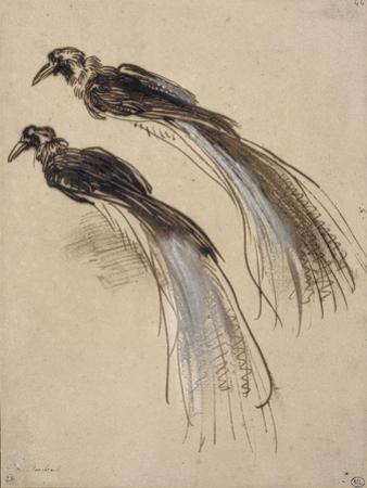 Deux études pour un oiseau de paradis by Rembrandt van Rijn