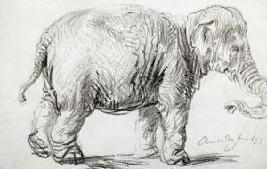 Elephant, 1637, Black Chalk Drawing by Rembrandt van Rijn