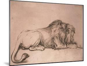 Lion couché rongeant un os by Rembrandt van Rijn