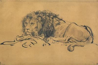 Lion Resting, Turned to the Left, C1650 by Rembrandt van Rijn