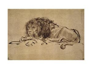 Lion Resting, Turned to the Left by Rembrandt van Rijn
