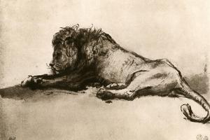 Study of a Lion, 1913 by Rembrandt van Rijn