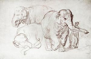Three Elephants by Rembrandt van Rijn