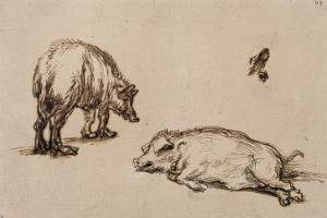 Un verrat debout, une truie couchée et étude d'un oeil et d'une oreille by Rembrandt van Rijn