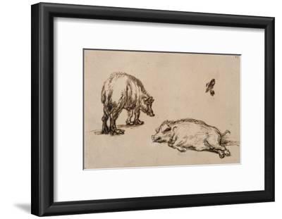 Un verrat debout, une truie couchée et étude d'un oeil et d'une oreille