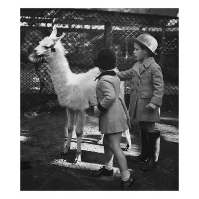 Vogue - November 1934 - Llama in a Petting Zoo