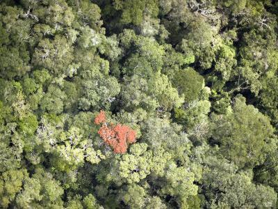 Remnant Forest in Mindongy du Sud National Park, Se Madagascar-Michael Fay-Photographic Print
