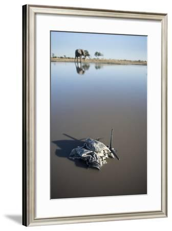 Remote Camera and African Elephant, Chobe National Park, Botswana-Paul Souders-Framed Photographic Print