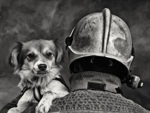 Dog's Best Friend. by Renato J.