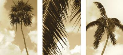 South Beach Palms