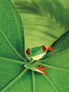 Tree Frog by Renee Lynn