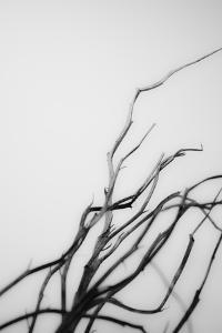 Searching Branches I by Renée Stramel
