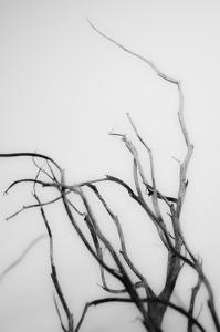 Searching Branches II by Renée Stramel