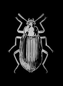 Silver Foil Beetle V on Black by Renée Stramel