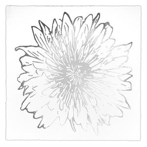 Silver Foil Flower Burst II Deckled by Renée Stramel