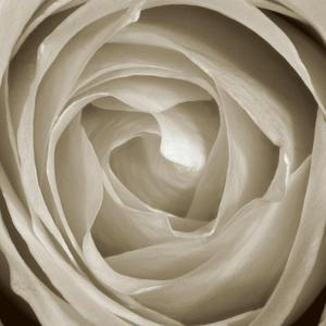 Rose Dawn II by Renee W^ Stramel