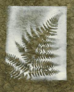 Shadows and Ferns I by Renee W^ Stramel