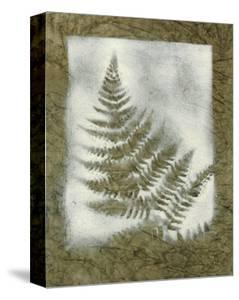 Shadows and Ferns II by Renee W^ Stramel