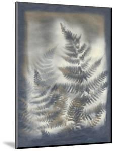 Shadows and Ferns V by Renee W^ Stramel