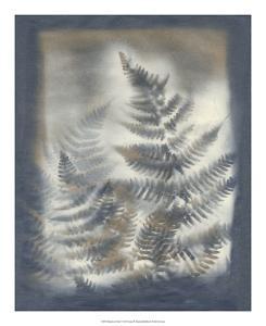 Shadows & Ferns V by Renee W^ Stramel