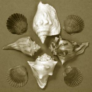 Shell Collector Series III by Renee W^ Stramel