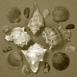 Shell Collector Series IV by Renee W^ Stramel