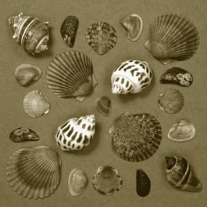 Shell Collector Series V by Renee W^ Stramel