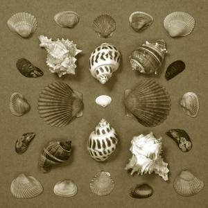 Shell Collector Series VI by Renee W^ Stramel