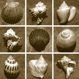 Shell Sampler by Renee W^ Stramel