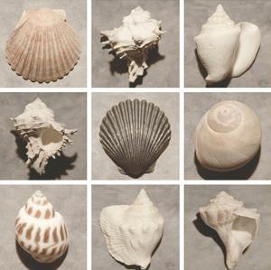 Weathered Shell Sampler by Renee W^ Stramel