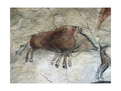 Replica of Cave Painting of Boar from Altamira Cave--Giclee Print