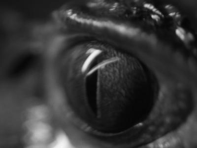 Reptile Eye-Henry Horenstein-Photographic Print