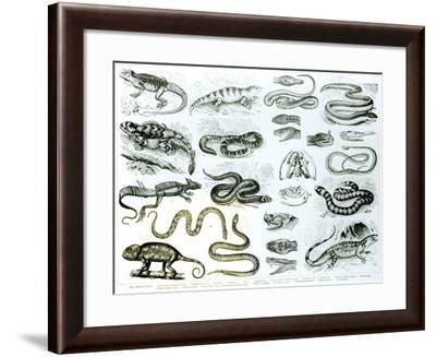 Reptiles, Serpents and Lizards--Framed Giclee Print