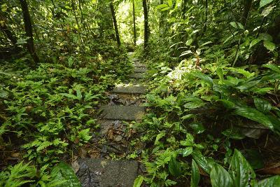 Research Trail Through the Tropical Forest of Barro Colorado Island, Panama-Jonathan Kingston-Photographic Print