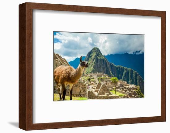 Resident Llama, Machu Picchu Ruins, UNESCO World Heritage Site, Peru, South America-Laura Grier-Framed Photographic Print