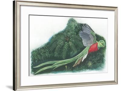 Resplendent Quetzal Pharomachrus Mocinno--Framed Giclee Print
