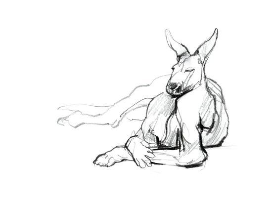 Resting Athlete (Red Kangaroo), 2012-Mark Adlington-Giclee Print
