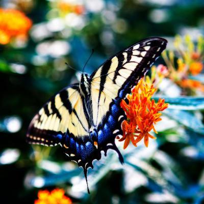 Resting Butterfly II-Alan Hausenflock-Photo