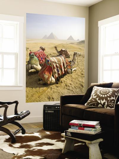 Resting Camels Gaze Across the Desert Sands of Giza, Cairo, Egypt-Dave Bartruff-Wall Mural