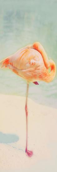 Resting Flamingo Panel-Roberta Murray-Photographic Print