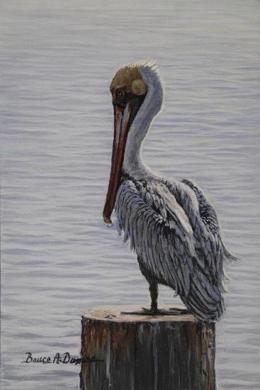 Resting Pelican-Bruce Dumas-Giclee Print